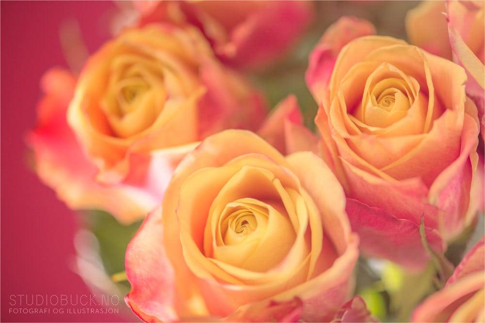 Blomster fra fornøyd kunde