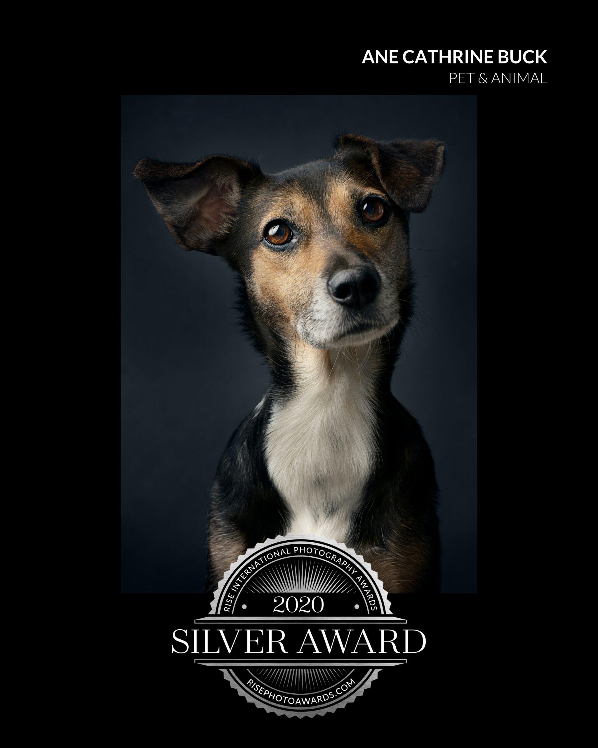 Trixie hund portrett sølvmedalje